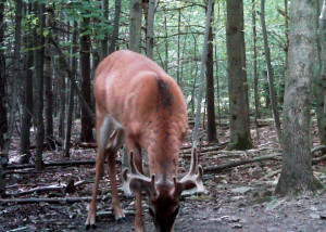 """A two year old eight point scoring in the 90-95"""" range. This is the high side of average for this area."""