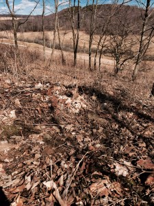 Beds are sometimes located where we least expect them. Deer use the same beds year after year for a reason; they provide security and scent or sight advantages.