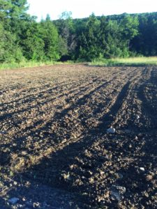 food plot tilled