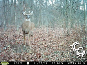 Small buck at scrape